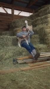 Silly Goats Soap - Sandy Goats on Bale